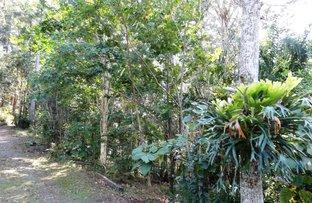 Picture of 473 Boggy Creek Road Thora, Bellingen NSW 2454