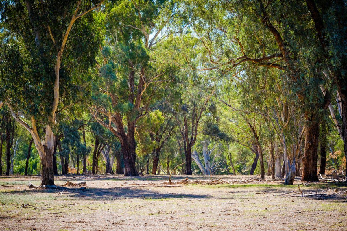 387 Ravenswood Road, Holbrook NSW 2644, Image 1