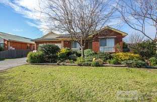 Picture of 12 Birchwood Court, Bairnsdale VIC 3875