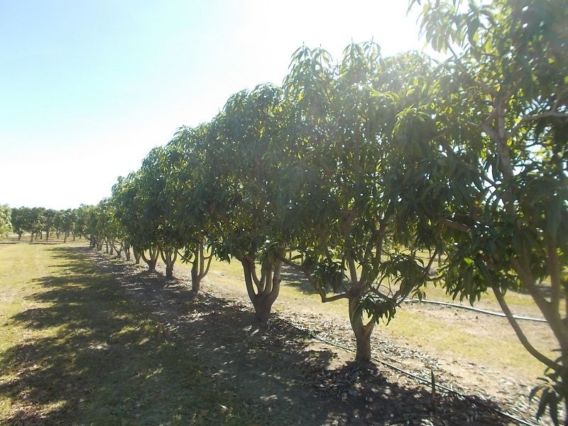 259 Murray Road, Woodstock QLD 4816, Image 2