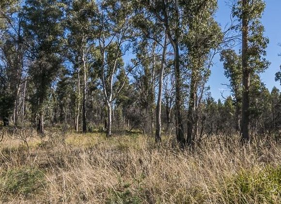 Lot 2 Lanes Tier Road, Ouse TAS 7140, Image 1