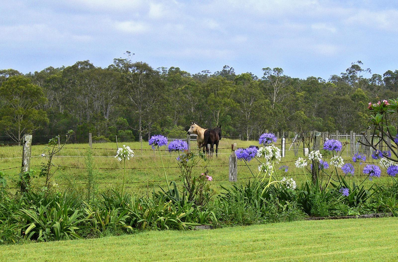 48 Charles Steemson Road, Yandaran QLD 4673, Image 1