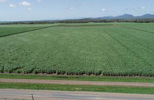 Picture of 1107 Up River Road, Proserpine QLD 4800