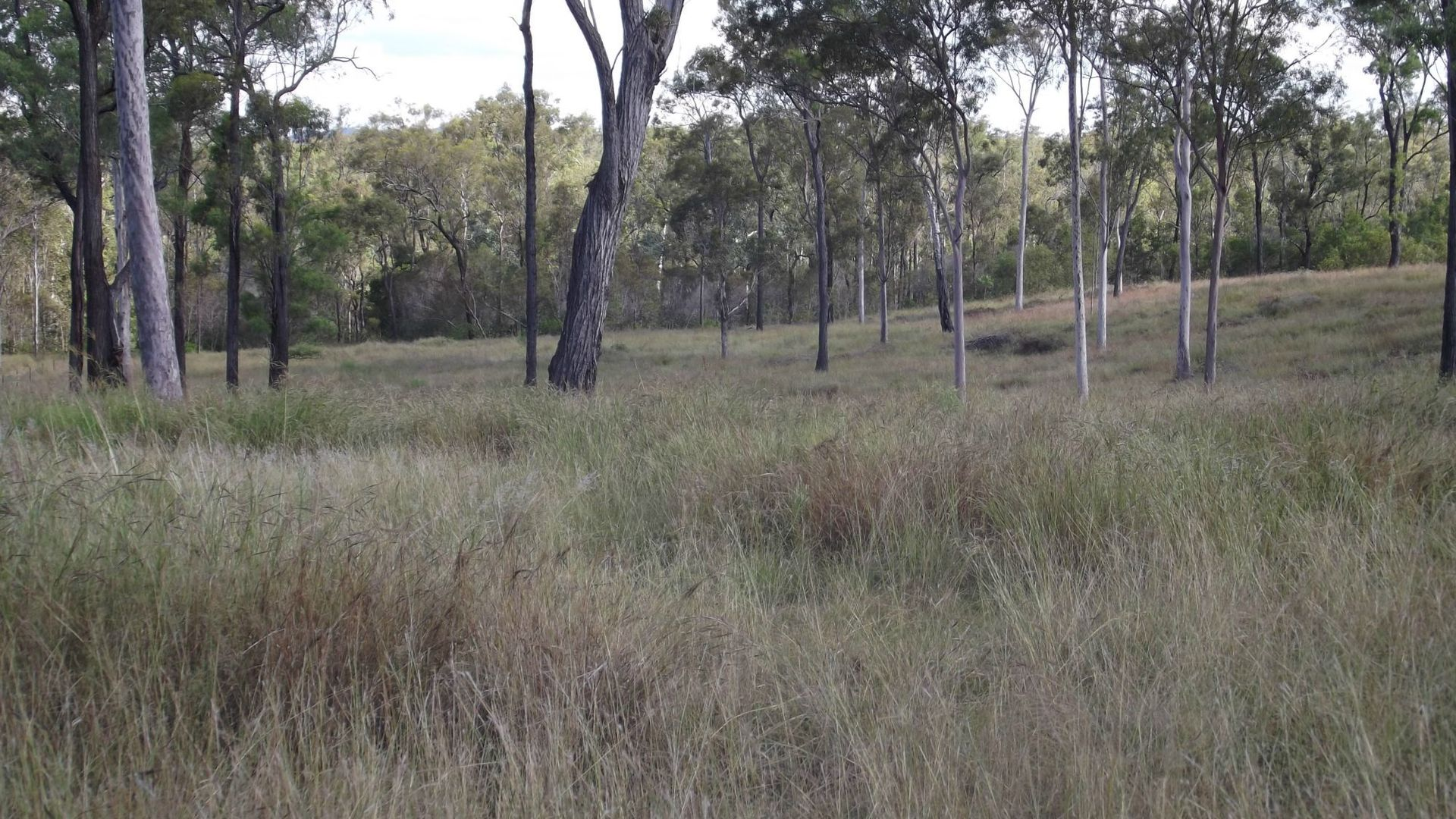 92 Corfield Drive, Booyal QLD 4671, Image 1