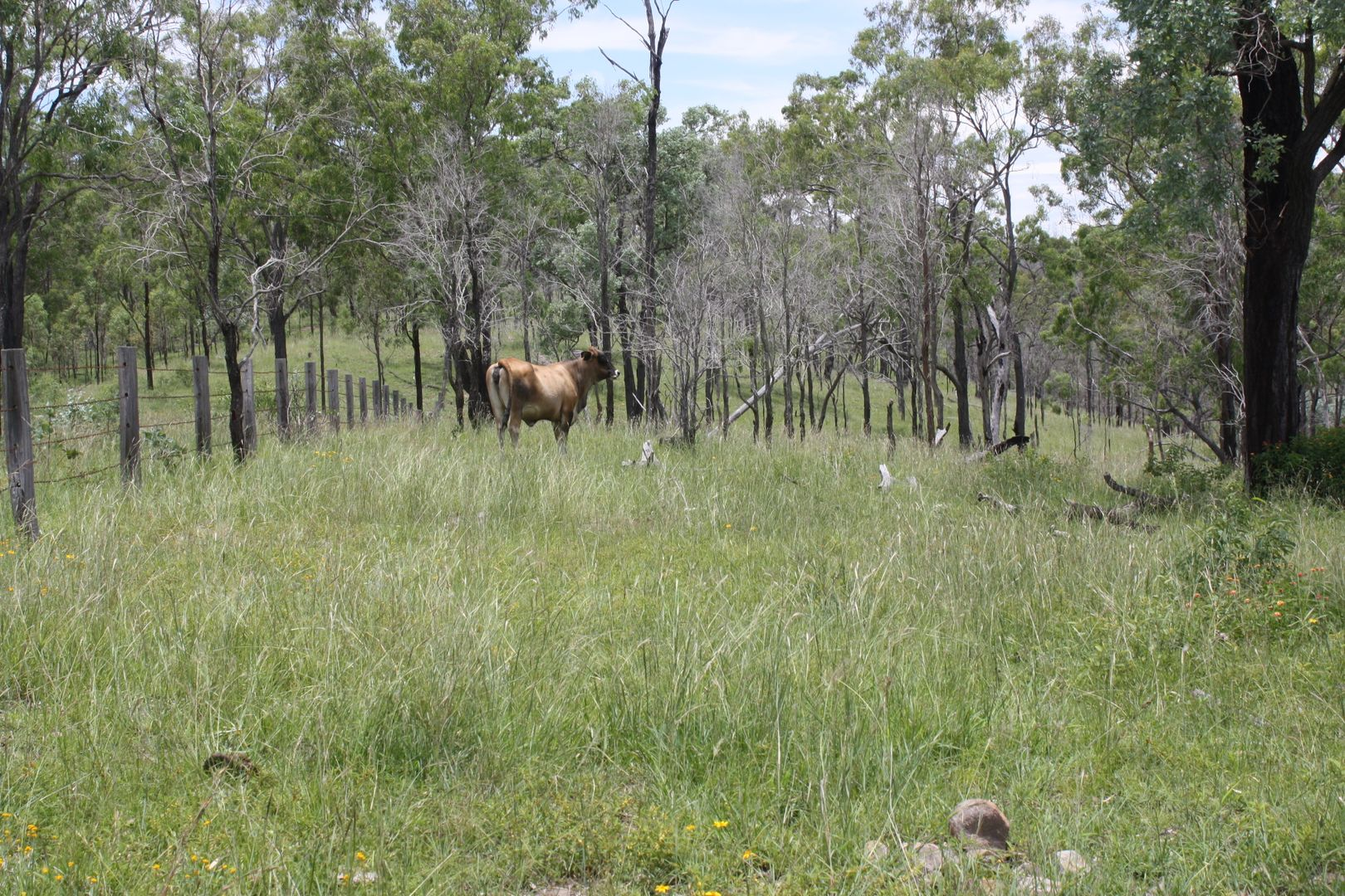 Lot 2 Burnett Highway, Goomeri QLD 4601, Image 1