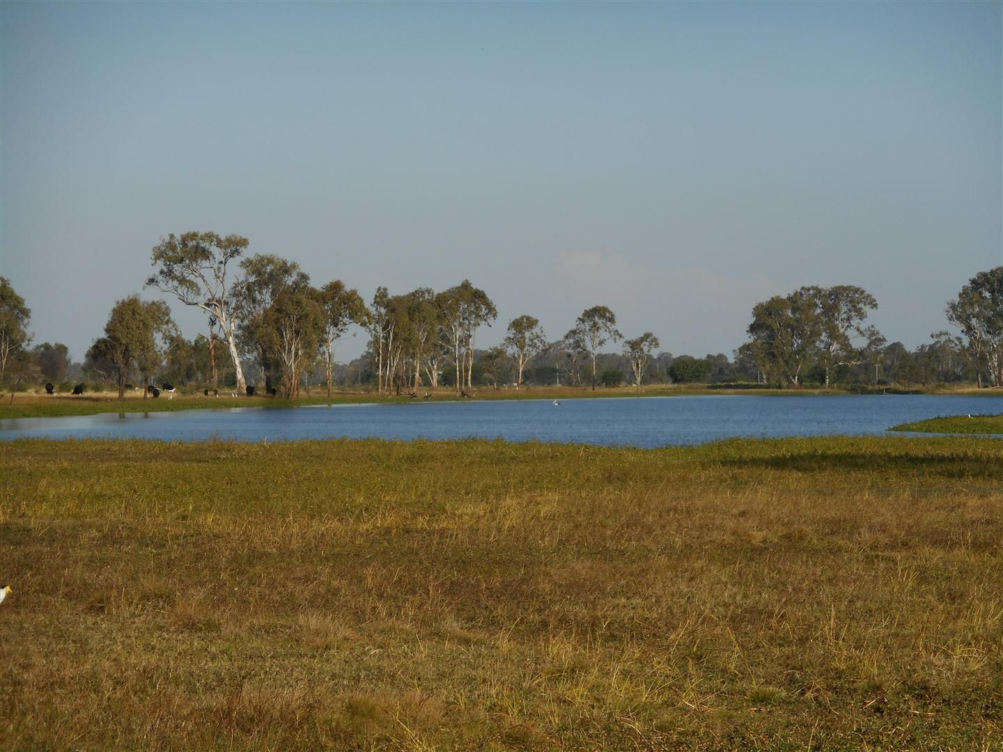 Lot 241 Titman Road, Fairy Bower QLD 4700, Image 0