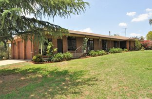 Picture of 13 Caledonian Street, Gulgong NSW 2852