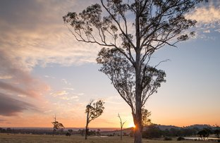 Picture of Lot 731 Wisteria Rise, Cobbitty NSW 2570