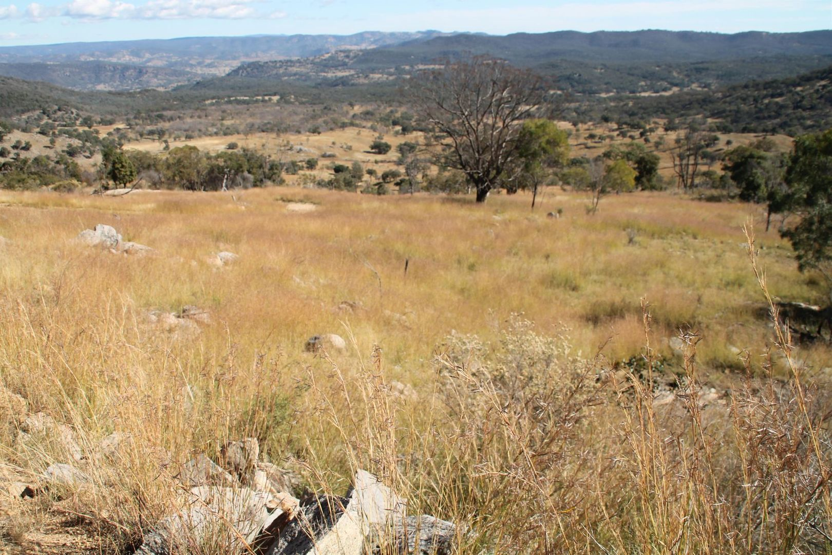 Lot 28 Gunyah Road, Tenterfield NSW 2372, Image 2