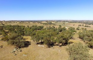 Picture of 90 Forbes Lane, Young NSW 2594