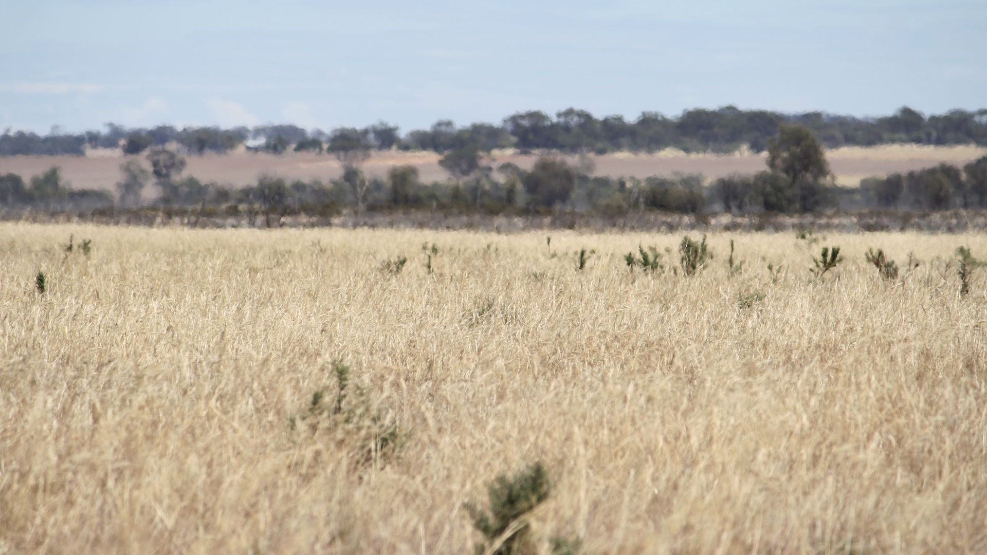 Lot 1 Rifle Range Road, Dumbleyung WA 6350, Image 2