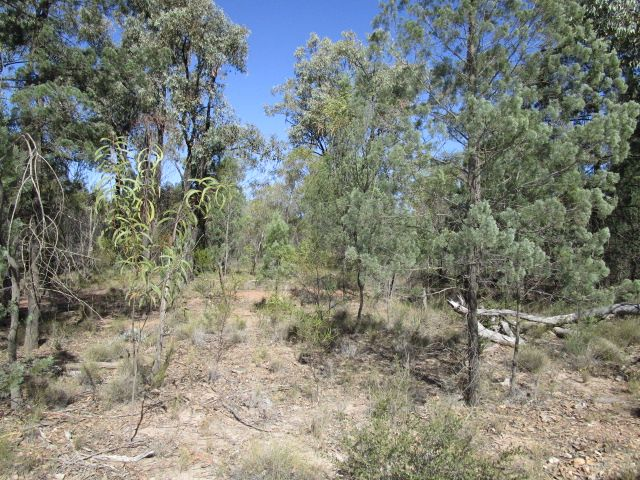 LOT 123 UPPER HUMBUG ROAD, Tara QLD 4421, Image 0
