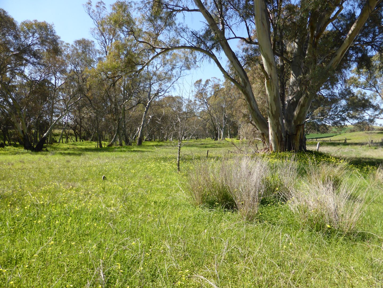 Lot 99 Combe Road, Stone Hut SA 5480, Image 2