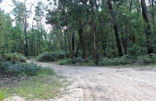 Picture of 345 Old Toolangi-Dixons Creek Road, Toolangi VIC 3777