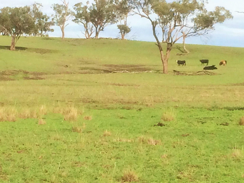 'Marjoyan' 6153 Golden Highway, Merriwa NSW 2329, Image 1