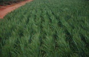 Picture of 3810 Balla-Whelarra Road, Binnu WA 6532