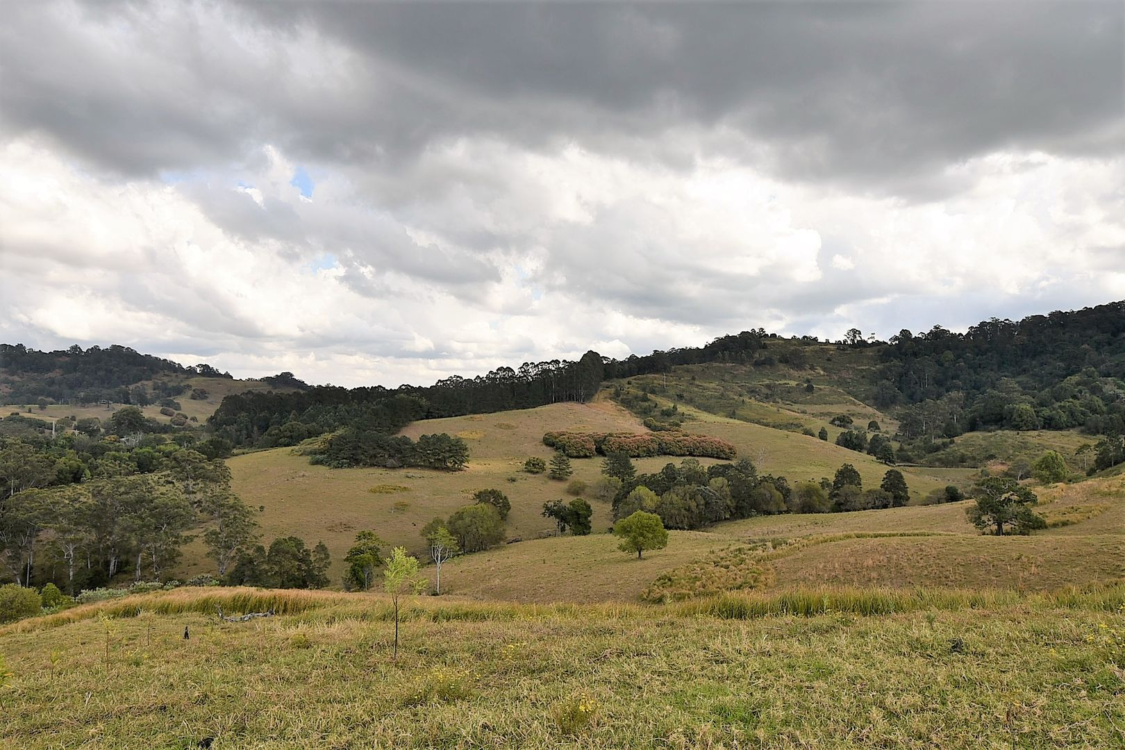 537 Tuntable Creek Road, Tuntable Creek NSW 2480, Image 0