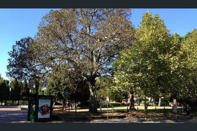 Picture of 1/183 Alison Road, RANDWICK NSW 2031