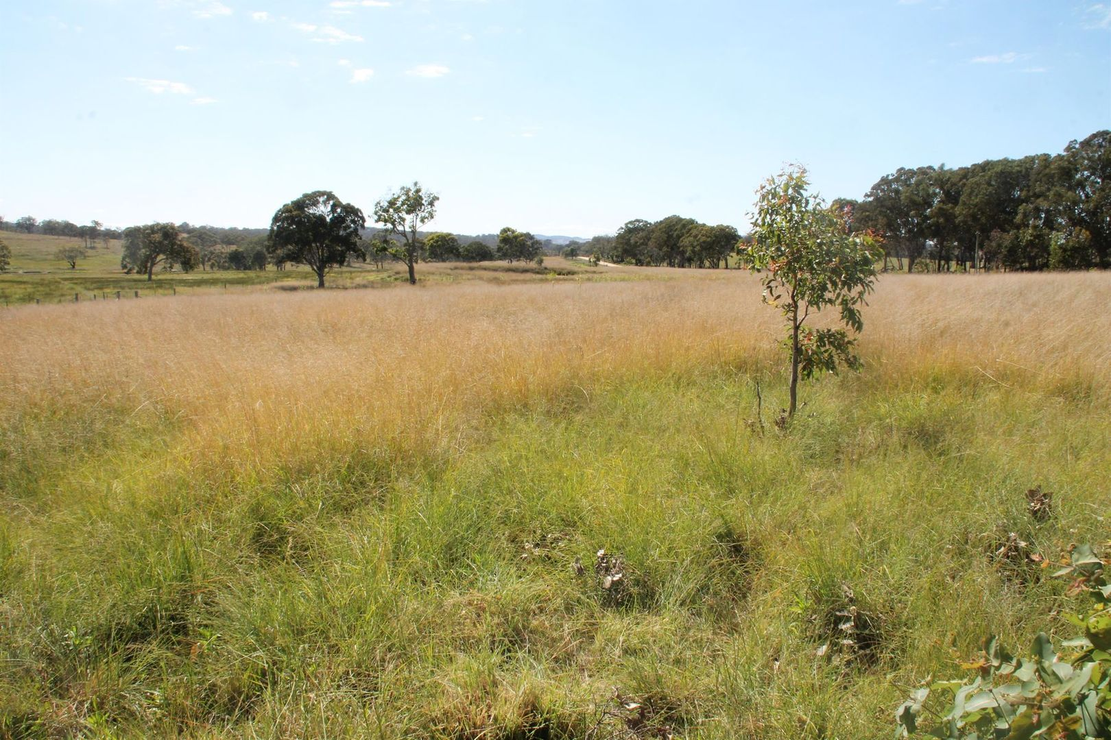 Lots 1 & 2 Wylie Creek Road, Maryland NSW 4377, Image 2
