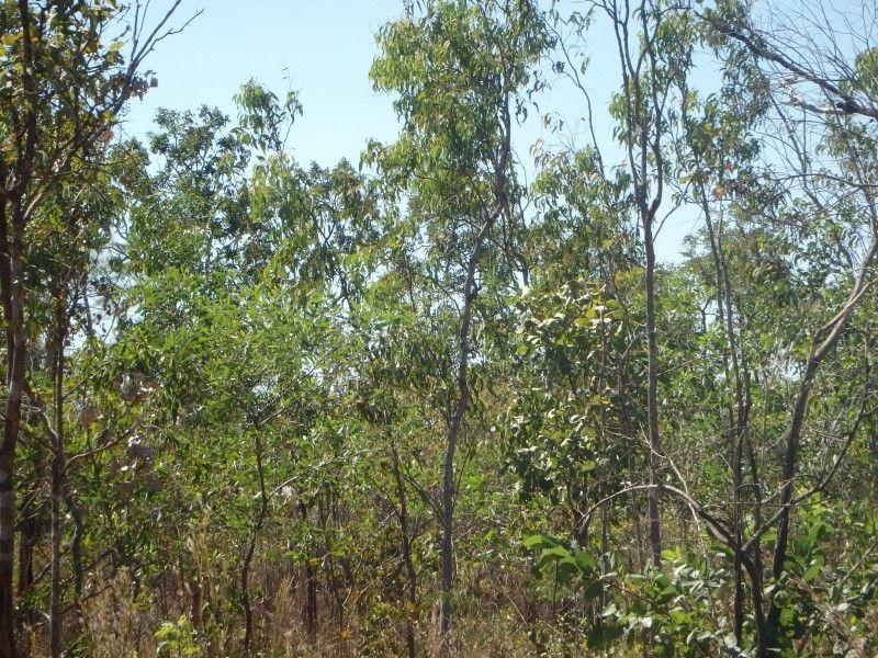 727 Reedbeds Road, Darwin River NT 0841, Image 0