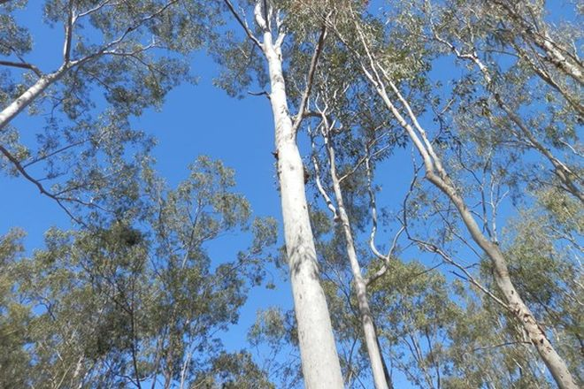 Picture of Lot 220 Rifle Range Road, DEEBING HEIGHTS QLD 4306