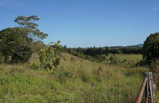 Picture of 227 Theresa Creek Road, Millaa Millaa QLD 4886