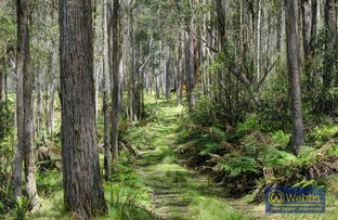 Picture of Barrington Tops NSW 2422