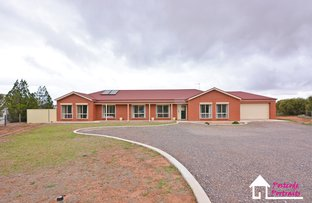 Picture of 3 Swagman Court, Whyalla Jenkins SA 5609