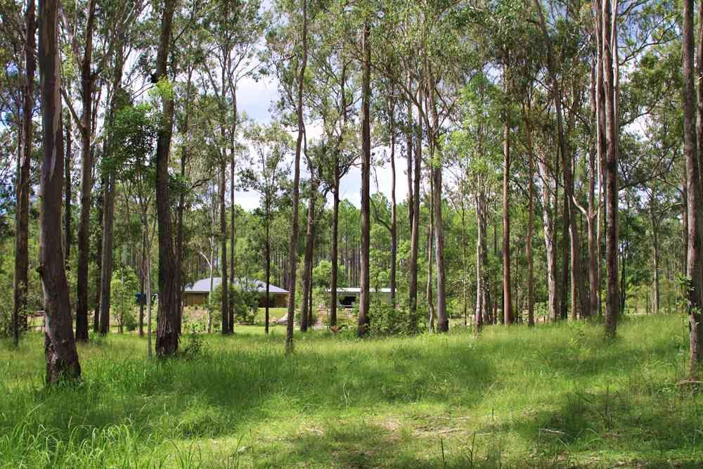 335 Arboreight Rd, Glenwood QLD 4570, Image 2