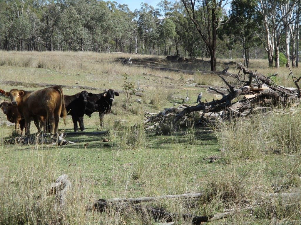 1264 ACRES BREEDER COUNTRY, Durong QLD 4610, Image 2