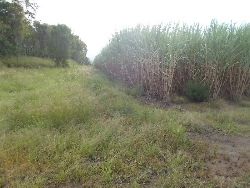 47219 Bruce Highway South, Bambaroo QLD 4850, Image 1