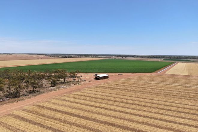 Picture of Citrus Grove Lachlan Valley Way, HILLSTON NSW 2675