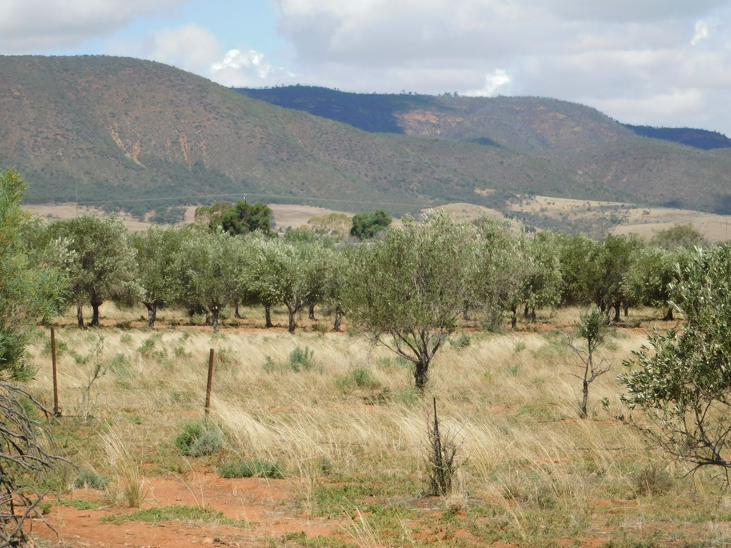 Section 240 Olive Grove Road, Napperby SA 5540, Image 1