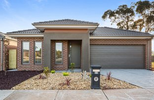 Picture of 13 Salvia Street, Mickleham VIC 3064