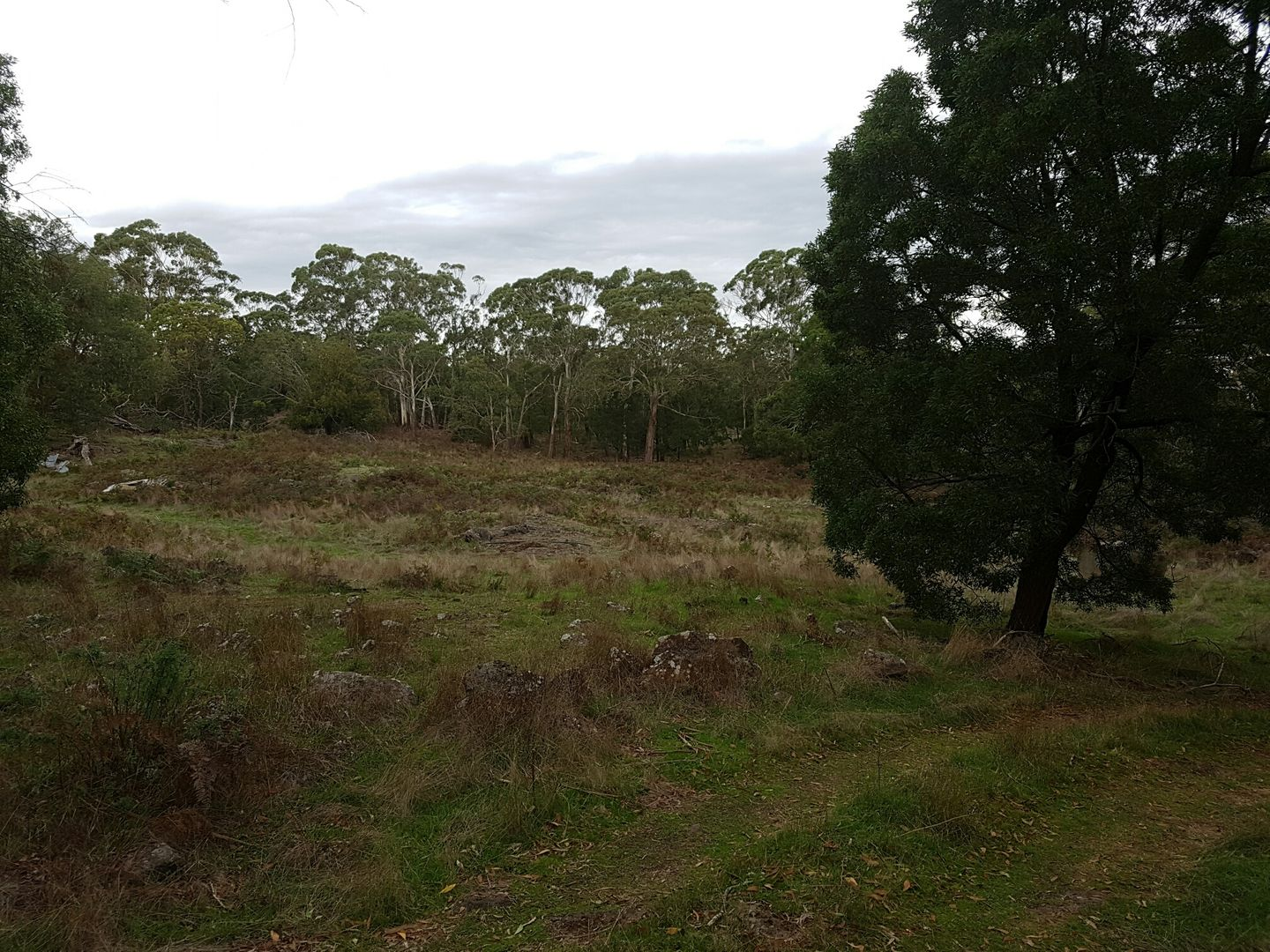 479 Scoullers Road, Stonyford VIC 3260, Image 2