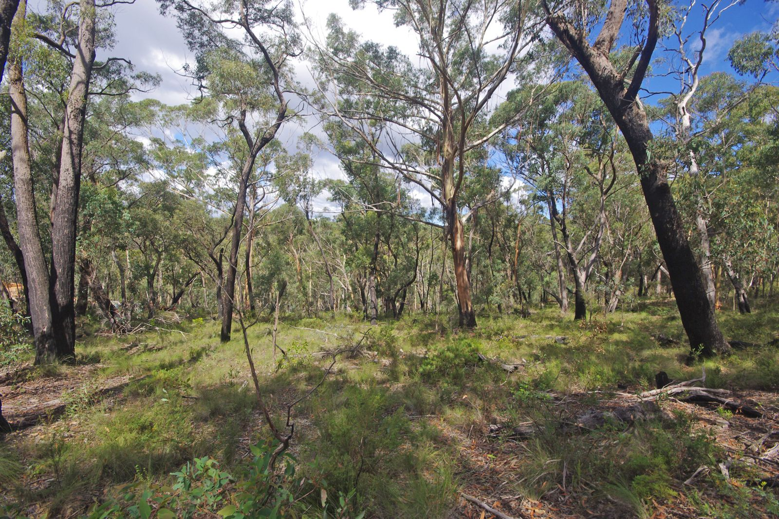 17 Chatsworth Rd, Mount Victoria NSW 2786, Image 0