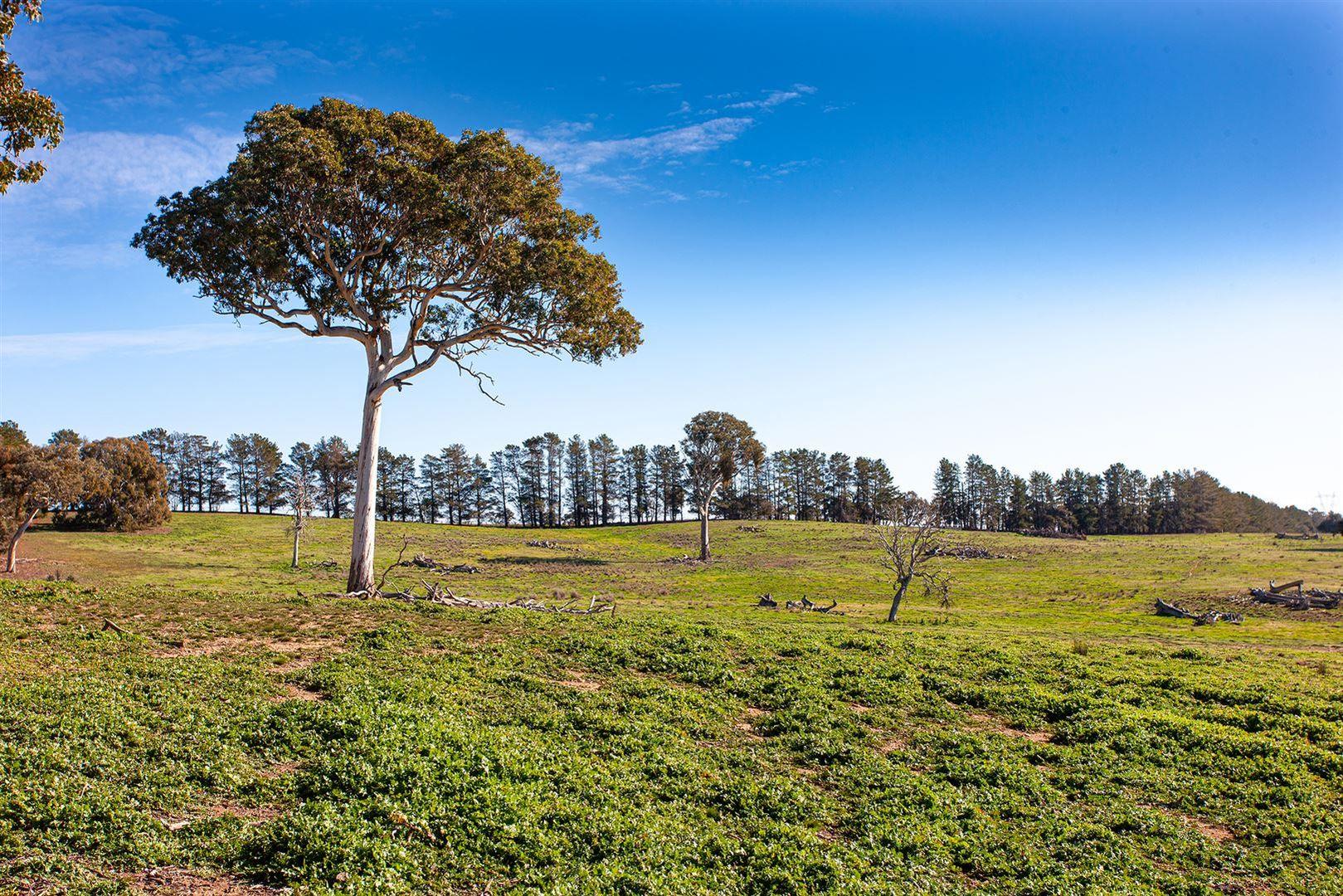 Lot 2 Elms Road, Gunning NSW 2581, Image 0