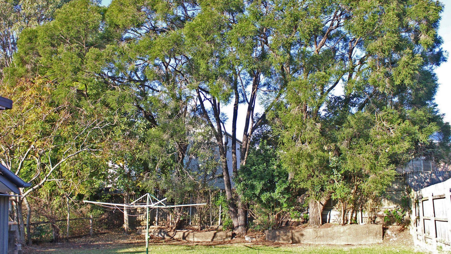 25 Adelaide Street, Carina QLD 4152, Image 2