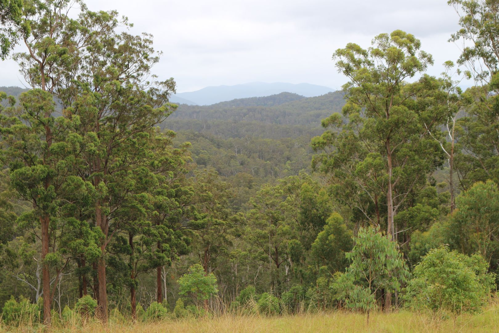 Doyles River NSW 2446, Image 2