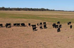 Picture of 342 Mulga Lane, West Wyalong NSW 2671