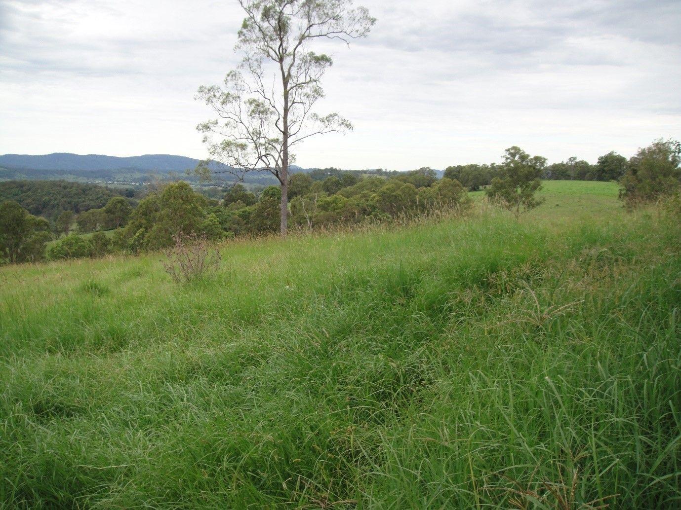 89 Afterlee Road, Kyogle NSW 2474, Image 1