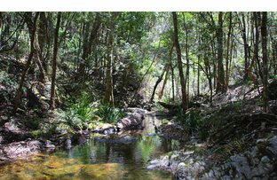 Picture of 780 Doyles River Road, Doyles River NSW 2446