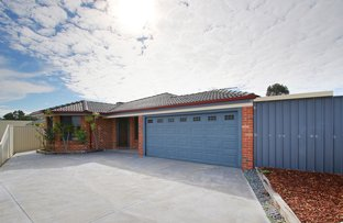 Picture of 111 Fruit Tree Crescent, Forrestfield WA 6058