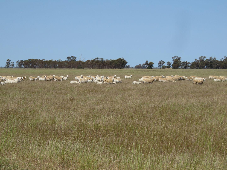 Gathen Road, Deniliquin NSW 2710, Image 2
