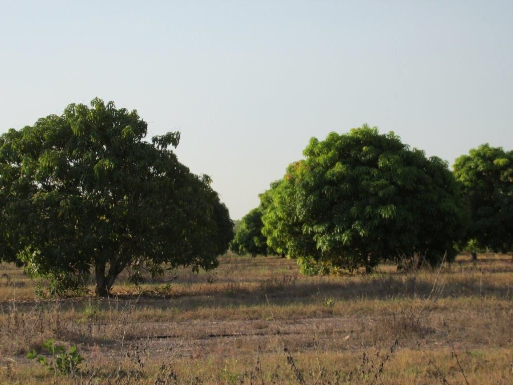Batchelor NT 0845, Image 0