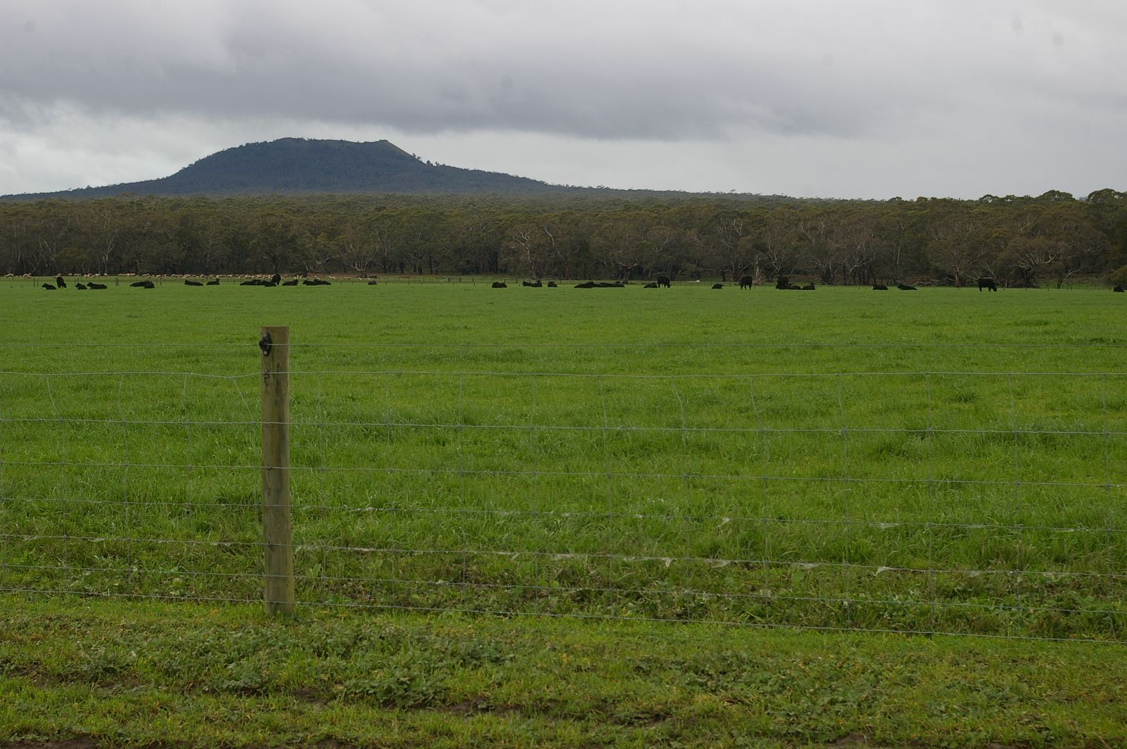 - Murroa-Bukley Swamp Rd and Coles Track, Mount Napier VIC 3301, Image 0