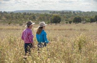 Picture of . 'Buena Vista' + 'Lacon', Mundubbera QLD 4626