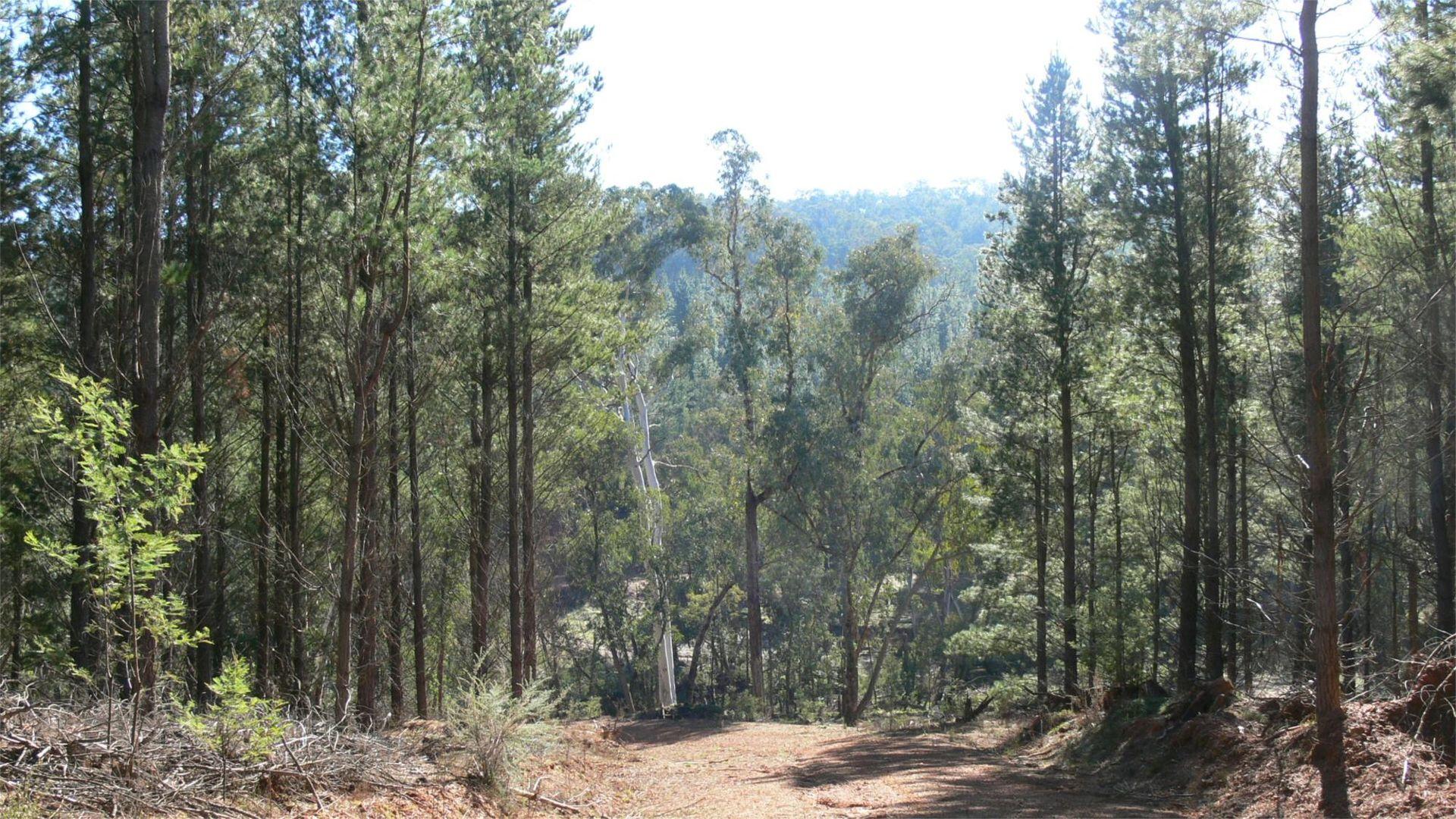 Lot 1 & 2 Jingellic Road, Lankeys Creek NSW 2644, Image 1