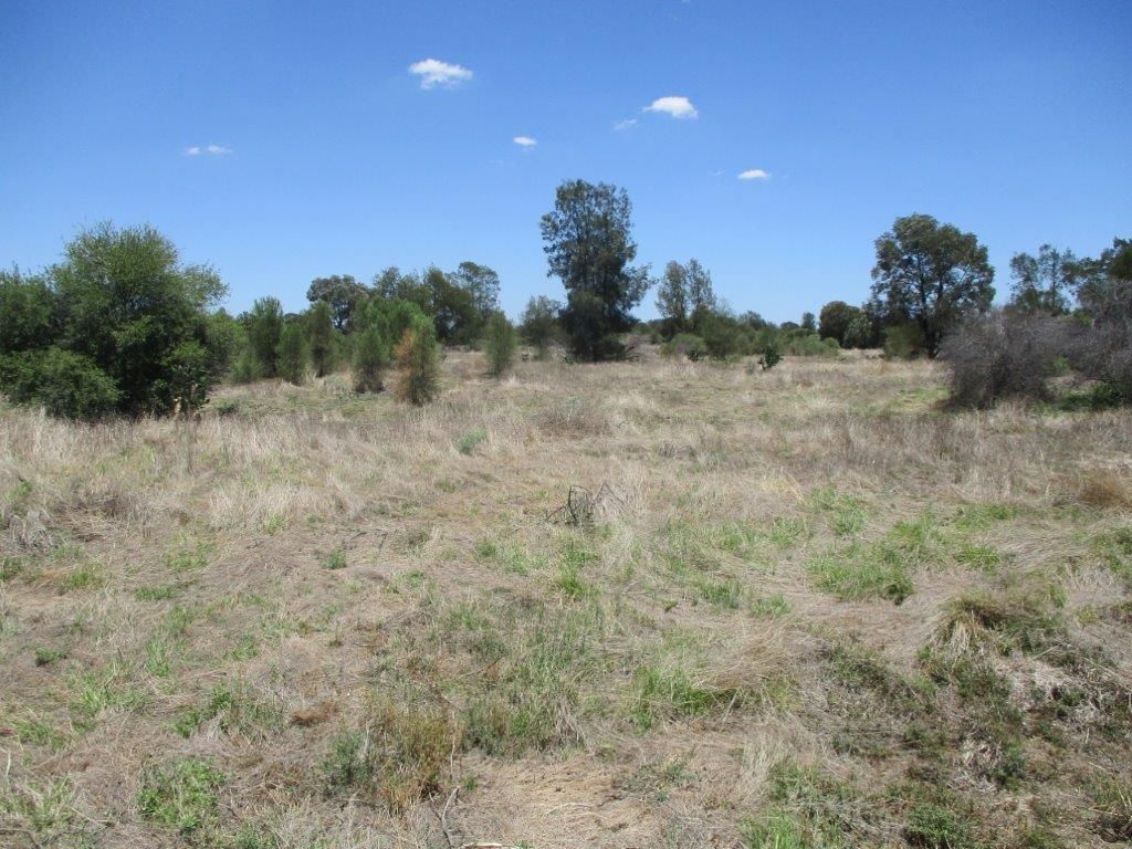1279 Acres Brigalow Country, The Gums QLD 4406, Image 1