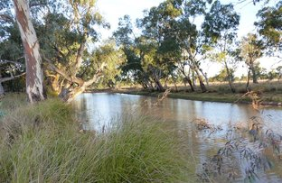 """Picture of . """"Lagoon Paddock"""", Roma QLD 4455"""